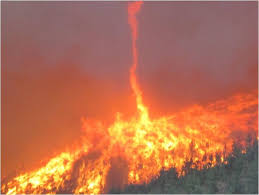 raging forest fire for triple win advisory sustainable business