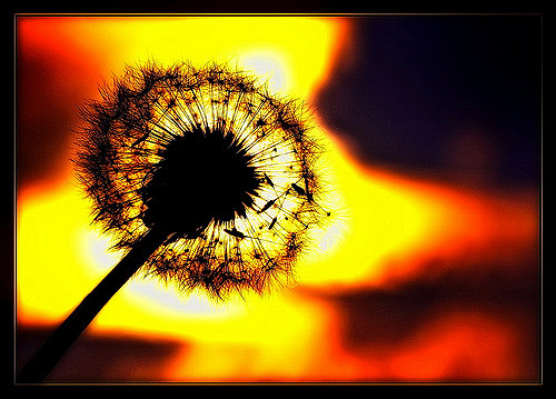 Dandelion head with fire - a personal approach to reducing climate change