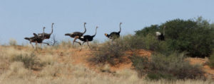 Ostriches running - run towards sustainability with Triple Win